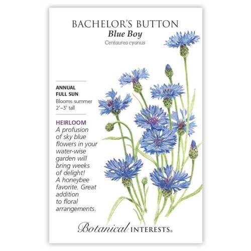 Blue Boy Bachelor's Button Seeds Heirloom