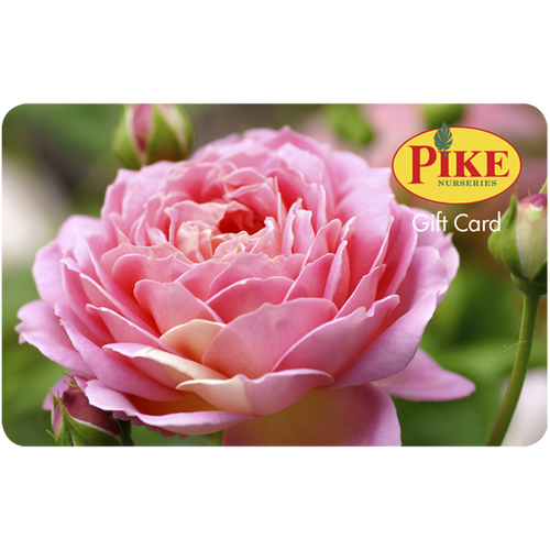 Rose Gift Card by Mail