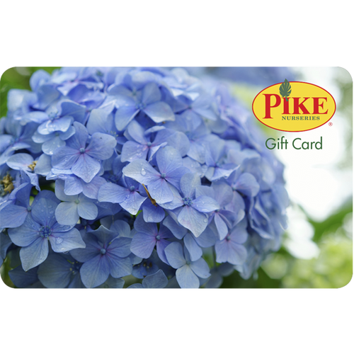 Hydrangea Gift Card by Mail