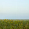 Painted Landscape #9 Bandana