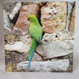 Green Bird Greeting Cards