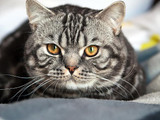 Cat Grooming Tips: How to Care for Your Cat's Coat and Claws