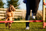How to Train Your Dog in Agility Sports