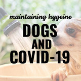​Guide to Maintaining Your Dog's Hygiene & Health During the Coronavirus Pandemic Part 1