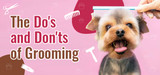 Home Grooming Tips: Do's and Don'ts