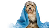 Our Top Dog Dryers