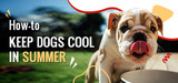 Tips to Keep Canines Cool in Summer