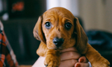 How to Train a Puppy to Accept Handling