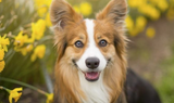 Spring Shedding : What To Do When Your Dog Loses Their Winter Coat