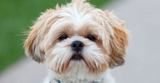 Canine Hair Damage: Causes and Effects