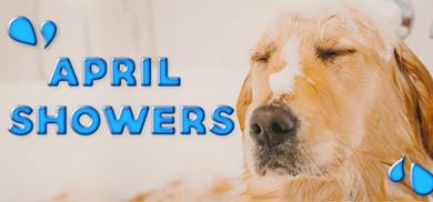 April Showers: Scrub-a-Dub, Get The Dog a Tub