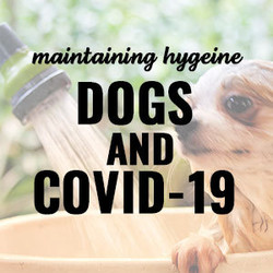 Guide to Maintaining Your Dog's Hygiene & Health During the Coronavirus Pandemic Part 1