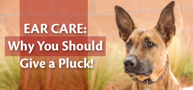 Ear Care: Why You Should Give a Pluck!
