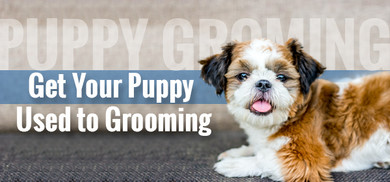 Starting the Ball Rolling on Puppy Grooming