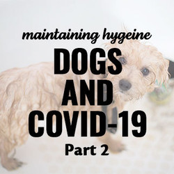 Guide to Maintaining Your Dog's Hygiene & Health During the Coronavirus Pandemic Part 2