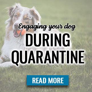 engagingdog.jpg