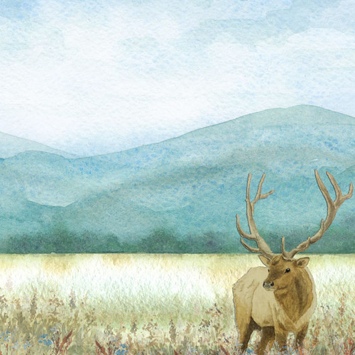 Watercolor Collection Elk 12 x 12 Double-Sided Scrapbook Paper by Scrapbook Customs