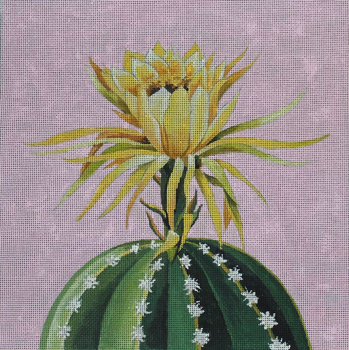 FF328 blooming cactus on pink 14x14 13M Colors of Praise