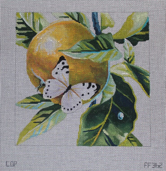 FF362 white butterfly on apple 9x9 13M Colors of Praise