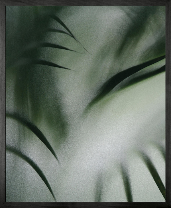 Michael Banks Palm etch 4 Framed Printed canvas