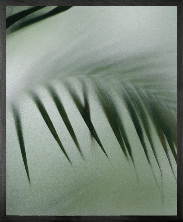 Michael Banks Palm etch 8 Framed Printed canvas