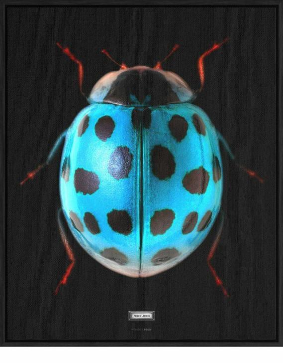 Emanuele Pangrazi Sir Ladybug Canvas