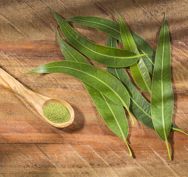 Nature Eucalyptus plants leaves and powder in a spoon on a wooden table
