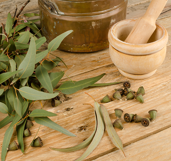 Nature Eucalyptus plants leaves on a wooden table