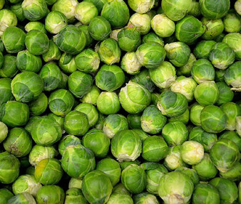 Brussels Sprouts Long Island Non GMO Seeds - Brassica Oleracea