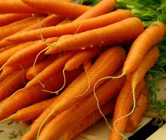 Carrot Danvers Non GMO Seeds - Daucus Carota