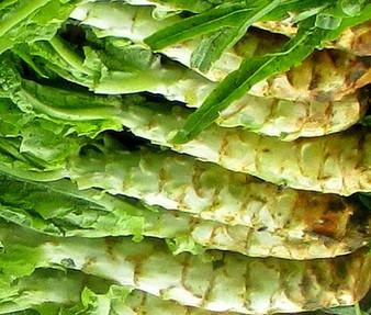 Lettuce Looseleaf Celtuce Non GMO Seeds - Lactuca Sativa