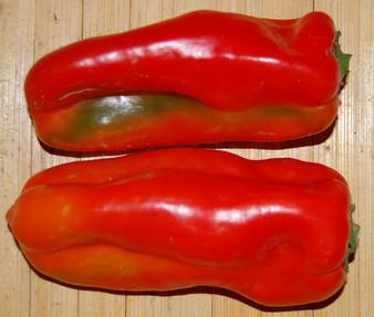 Pepper Sweet Red Marconi Organic Seeds - Capsicum Annuum