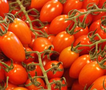 Tomato Roma Plum VFN Organic Seeds - Lycopersicon Esculentum