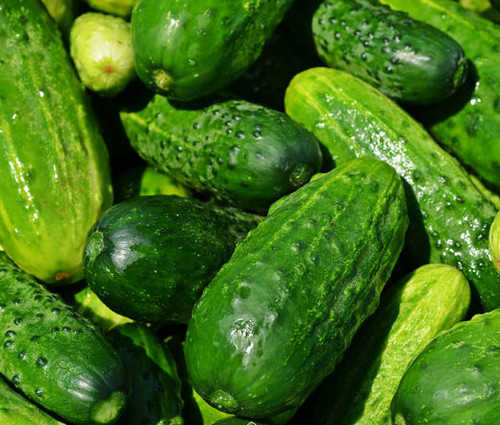 Cucumber National Pickling Organic Seeds - Cucumis Sativus