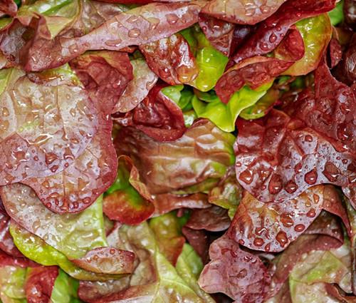 Lettuce Romaine Cimarron Red Non GMO Seeds - Lactuca Sativa