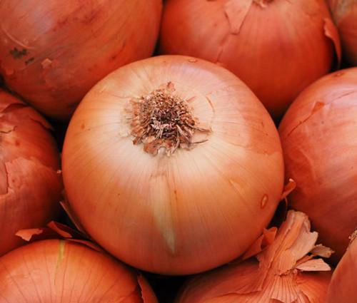 Onion Sweet Spanish Yellow Non GMO Seeds - Allium Cepa