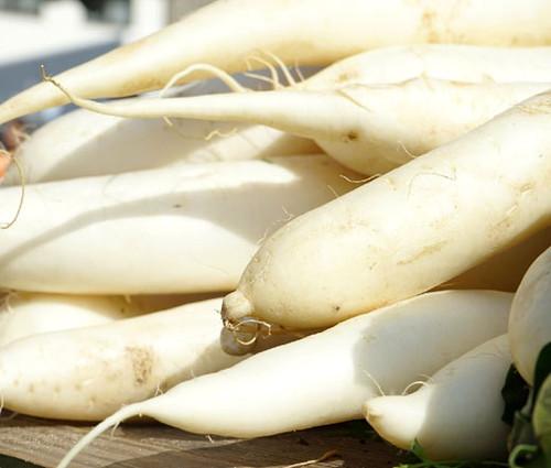 Radish Daikon Oriental Organic Seeds - Raphanus Sativus