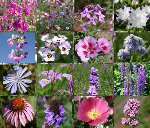 Wildflower Mix Purple Seeds