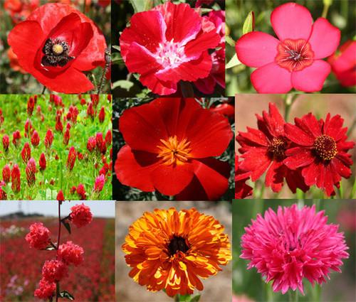 Wildflower Mix Red Seeds