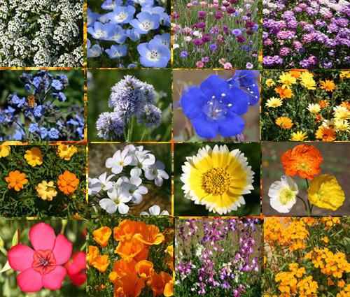 Wildflower Mix Short Creek Seeds