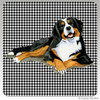 Bernese Mountain Dog Lying Down Houndzstooth Coasters