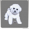 Bichon Puppy Houndzstooth Coasters