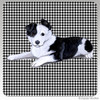 Border Collie Puppy Houndsztooth Coasters