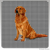 Sitting Golden Retriever Houndzstooth Coasters
