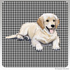 Golden Retriever Puppy Houndzstooth Coasters