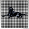 Black Lab Lying Houndzstooth Coasters