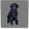 Black Lab Puppy Houndzstooth Coasters