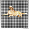 Yellow Lab Lying Houndzstooth Coasters