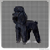 Black Poodle Houndzstooth Coasters