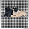 Pug Pair Houndzstooth Coasters